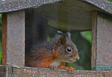 column-cees-eekhoorn