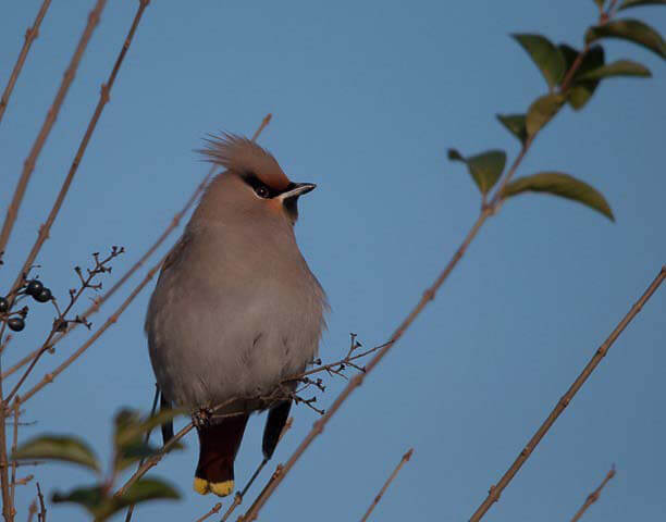 pestvogel-de-krant-vogelcursus
