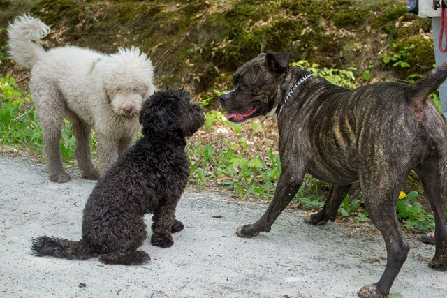 Roden Hondenverhaal judith